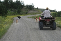 ATV running dogs